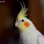 Pet-photography-Yuri-w