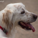 Pet-photography-cane-2